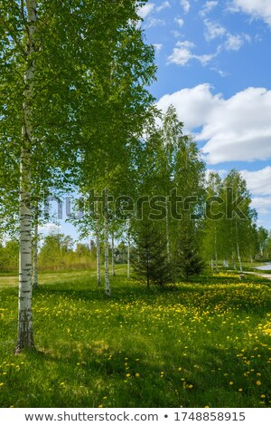 kilátás · folyó · bankok · zöld · fák · kék - stock fotó © oleksandro