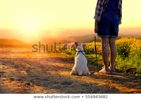 Stock photo: child with dog at sunset