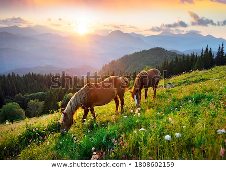 horse on a summer pasture in the mountains stock photo © kotenko