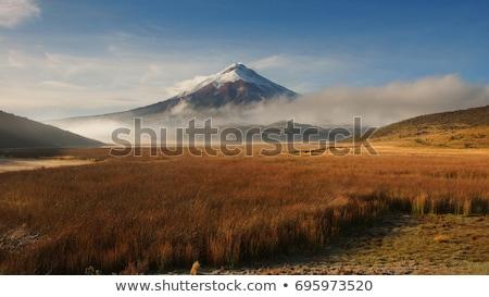 Belo ver montanha Equador árvore grama Foto stock © scornejor