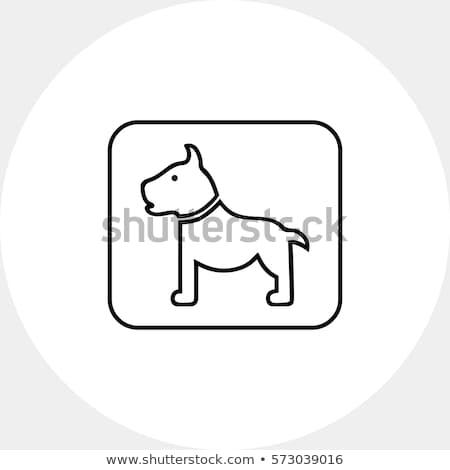 Sniffing dog chceking luggage Stock photo © Amaviael