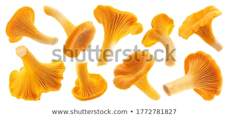 Raw Chanterelles Mushrooms Stock photo © zhekos