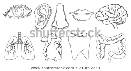 Doodle design of the different internal and external body parts Stock photo © bluering