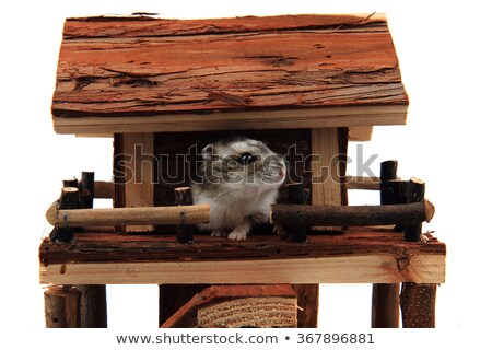 Doğal ahşap ev oyuncak hamster yalıtılmış Stok fotoğraf © jonnysek