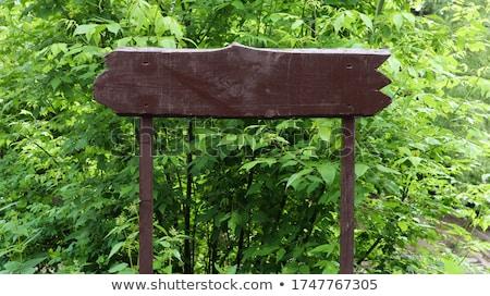 Holzschild grünen Busch Illustration Schmetterling Hintergrund Stock foto © bluering
