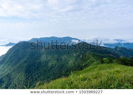 sunrise on phu chi fa forest park thailand stock photo © yongkiet