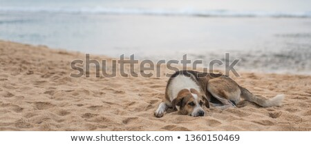 救助 · 犬 · ビーチ · 実例 · 海 · ヘルプ - ストックフォト © hofmeester