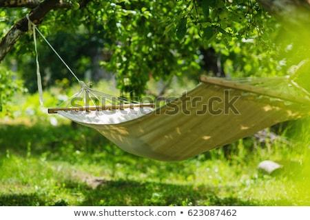 Fák napos nyár nap pihen senki Stock fotó © stevanovicigor