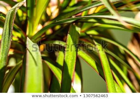 Pók növények természet növény növekedés senki Stock fotó © IS2