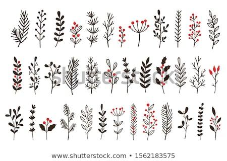 Vektor szett karácsony növények botanikus illusztráció Stock fotó © frescomovie