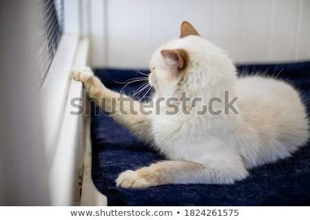 cat in kennel stock photo © cynoclub