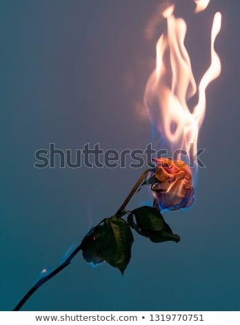огня закрывается пламени черный цветок Сток-фото © blackmoon979