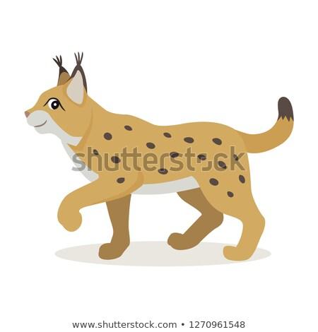 Vriendelijk bos dier cute Geel lynx Stockfoto © MarySan