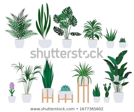 Ilustração ícone flores linear estilo casa Foto stock © Olena