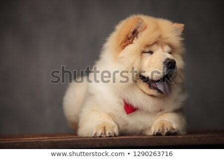 Cute rouge haletant Photo stock © feedough