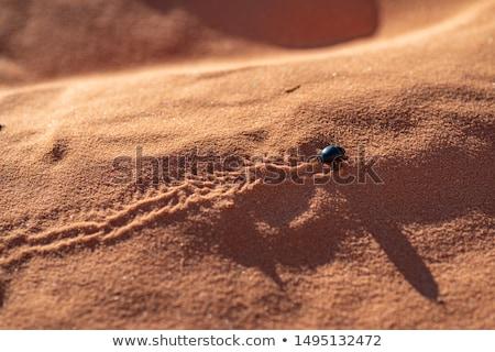 砂丘 小 動物 自然 風景 砂漠 ストックフォト © goce