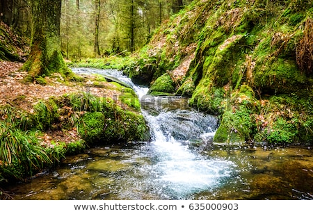 Beautiful scene in the forest with waterfall and river stream Stock photo © X-etra