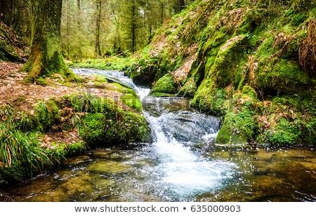 Gyönyörű jelenet erdő vízesés folyó folyam Stock fotó © X-etra