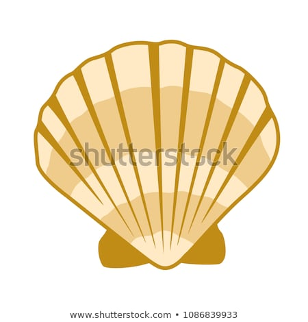 Karikatur Shell Perle isoliert weiß Kunst Stock foto © cidepix