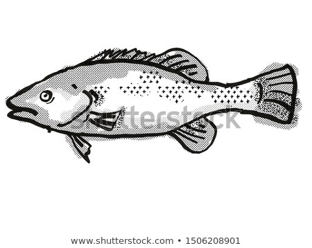 Trout Cod Australian Fish Cartoon Retro Drawing Stock photo © patrimonio