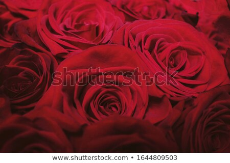 Gourgeous luxury bouquet of red roses, flowers in bloom as flora Stock photo © Anneleven