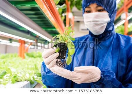 Biológus maszk tart zöld palánta kicsi Stock fotó © pressmaster