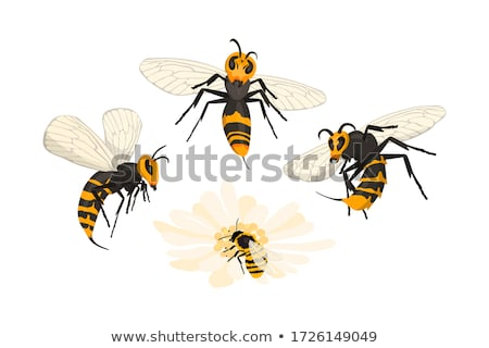 Giant Hornet Predator Attacking Bees Stock photo © Lightsource