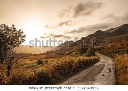 Ovelha lacuna paisagem campo verde europa Foto stock © t3mujin