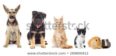 mixed breed dog and a rabbit Stock photo © eriklam