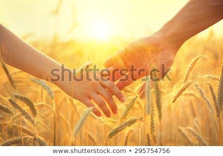 boldog · pár · búzamező · fiatal · pér · szeretet · románc - stock fotó © paha_l