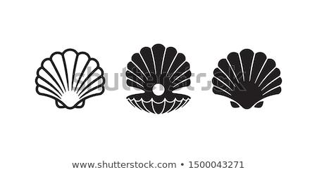 dois · marrom · conchas · concha · superfície · abstrato - foto stock © hasenonkel
