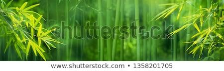 бамбук · акварель · весны · зеленый · синий · тропические - Сток-фото © Galyna