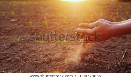 hand in soil Stock photo © smithore