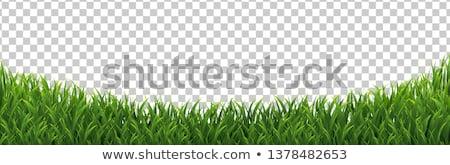 Wesp witte bloem vergadering groene Maakt een reservekopie Stockfoto © prill