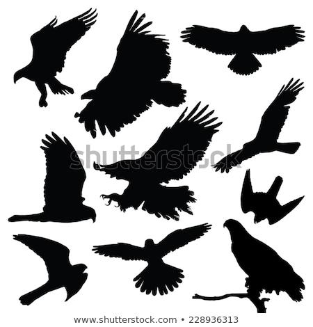 silhouette of kestrel stock photo © perysty