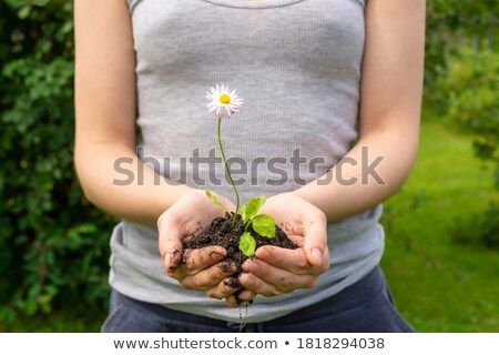 solicitation with flowers Stock photo © dolgachov