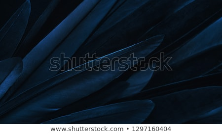 Feathers background Stock photo © Pietus
