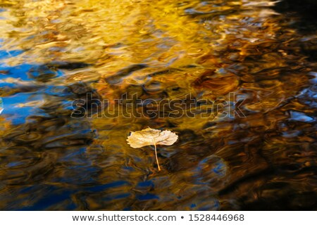 bright aspen leaves in water stock photo © emattil