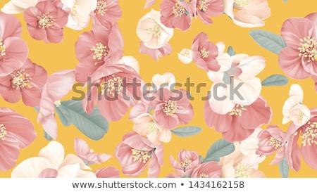 айва цветок красный макроса сезон Сток-фото © haraldmuc