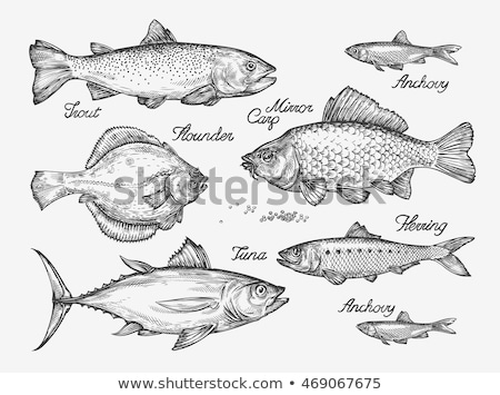 Drawing trout Stock photo © Ustofre9