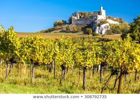 Falkenstein Castle Ruins, Lower Austria Stock photo © Bertl123