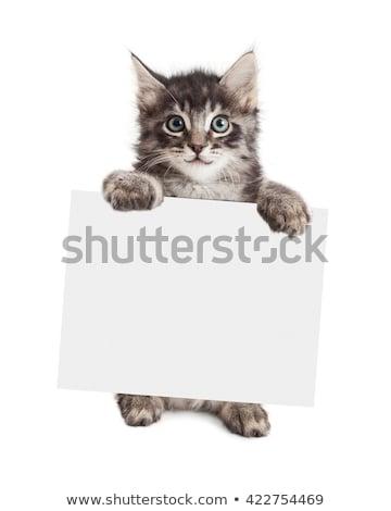Сток-фото: Cat Kitten Blank Sign