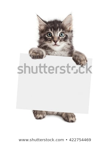 Cat Holding Sign Stock photo © Lightsource