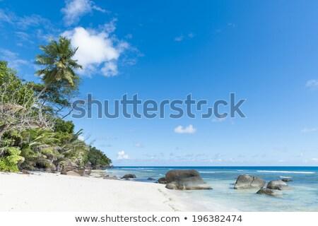 夢のような ビーチ 海 青空 植物 ストックフォト © jrstock