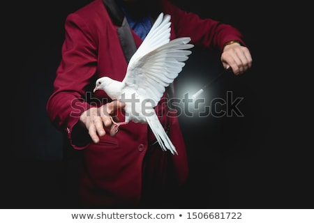 魔法 鳩 手 鳥 楽しい 羽毛 ストックフォト © Alegria111