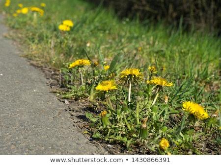 flor · primavera · grama · planta · belo · amarelo - foto stock © francis55