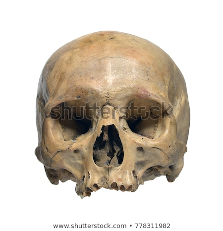 Oude schedel verlagen kaak medische kunst Stockfoto © sharpner