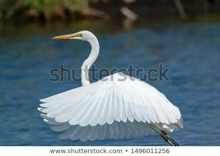 blanco · vuelo · agua · cielo · naturaleza · mar - foto stock © davemontreuil
