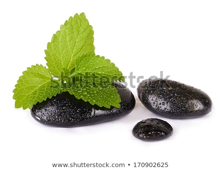 zen stones with mint leaves on a black background stock photo © g215