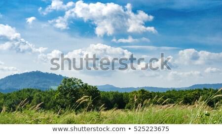 gyönyörű · sárga · virágok · hegy · kék · ég · bűn · természet - stock fotó © Ainat
